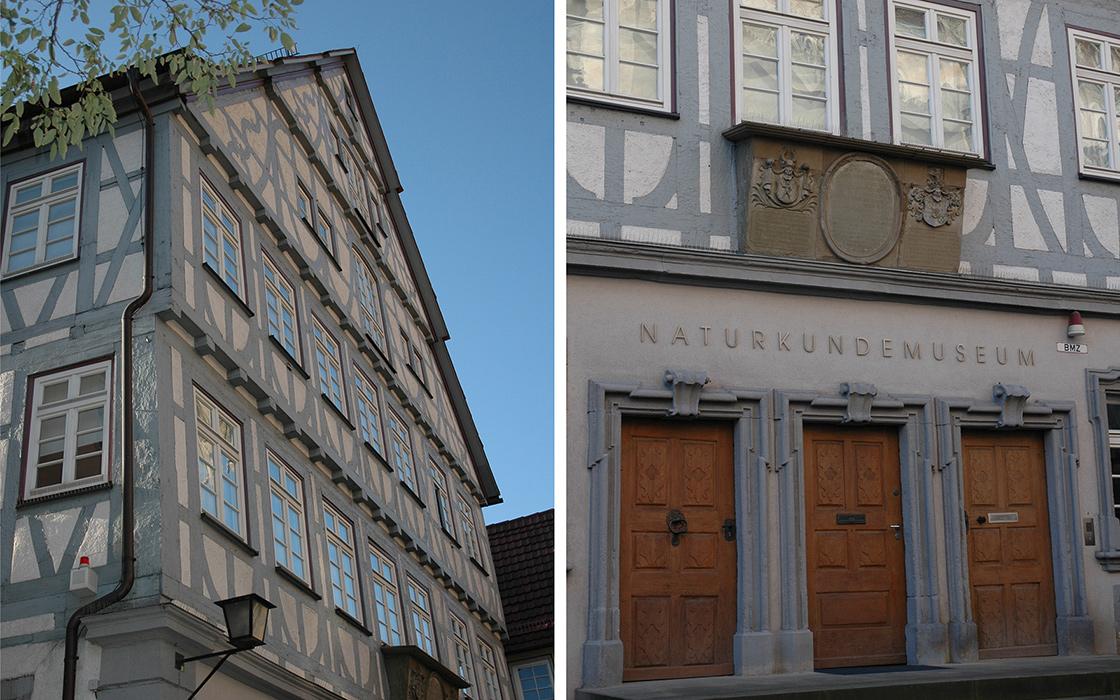 Umbau_Naturkundemuseum_01